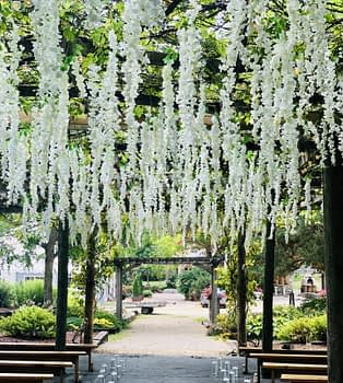 Hanging wisteria Minnesota wedding florist near northfield