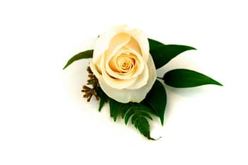 wedding-boutonnieres-corsages-minneapolis-cream-rose